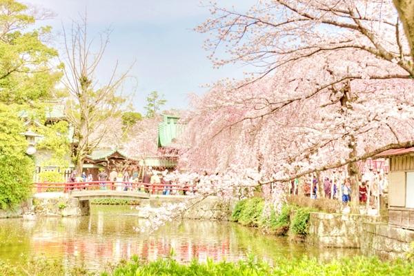 東京都品川から最短約38分 新規クリニックで院長募集!2016年6月開業予定