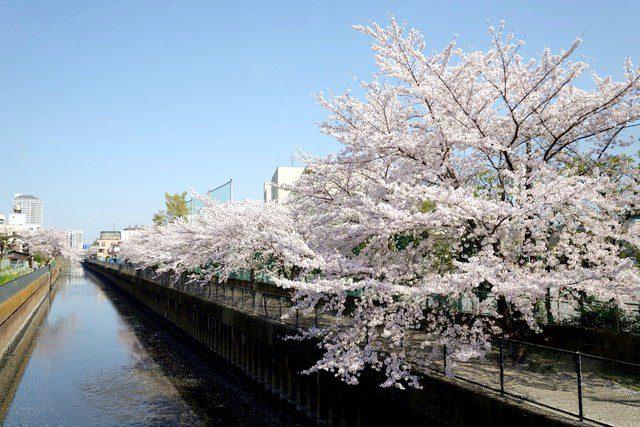 埼玉県草加市の一般病院にて循環器内科医師を募集しています。